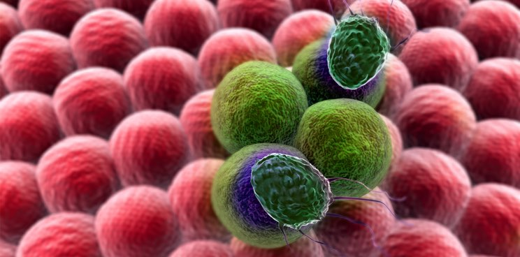Cancer Research UK Teams Up with London Startup in Immuno-oncology